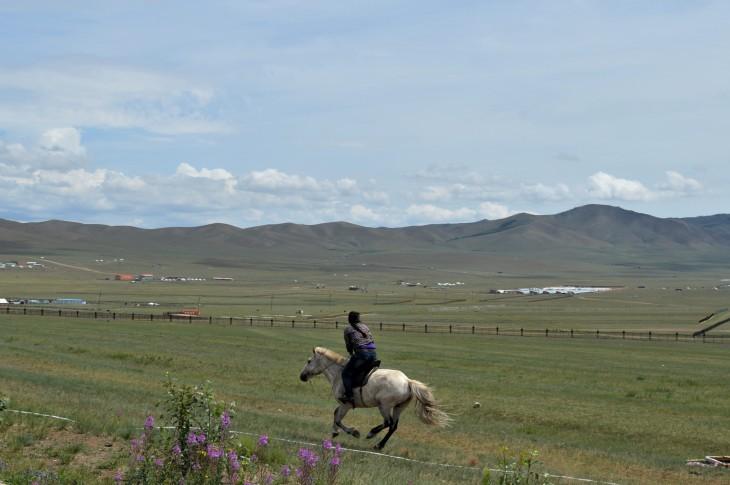 Mongolia-horse